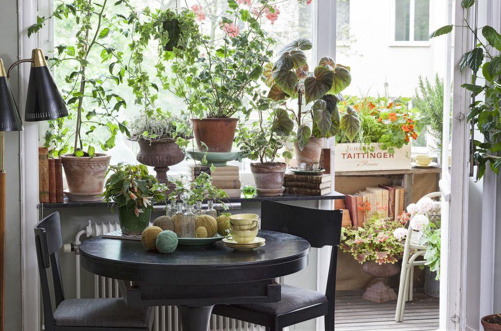 Våren er perfekt tid for pottebytte. Slik sjekker du om plantene dine trenger å ompottes.