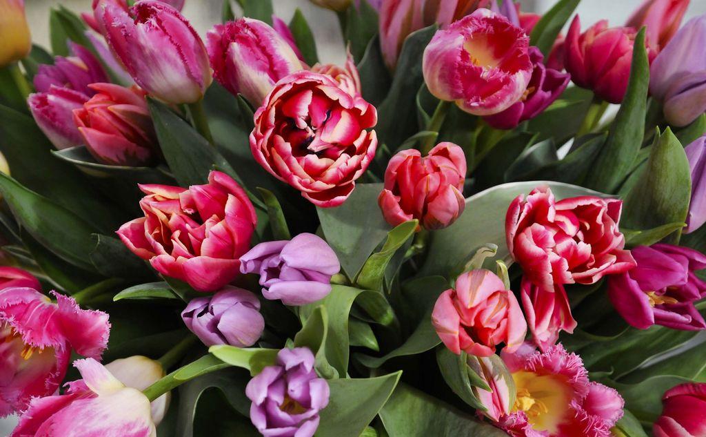 Dette er blomstenes hemmelige språk