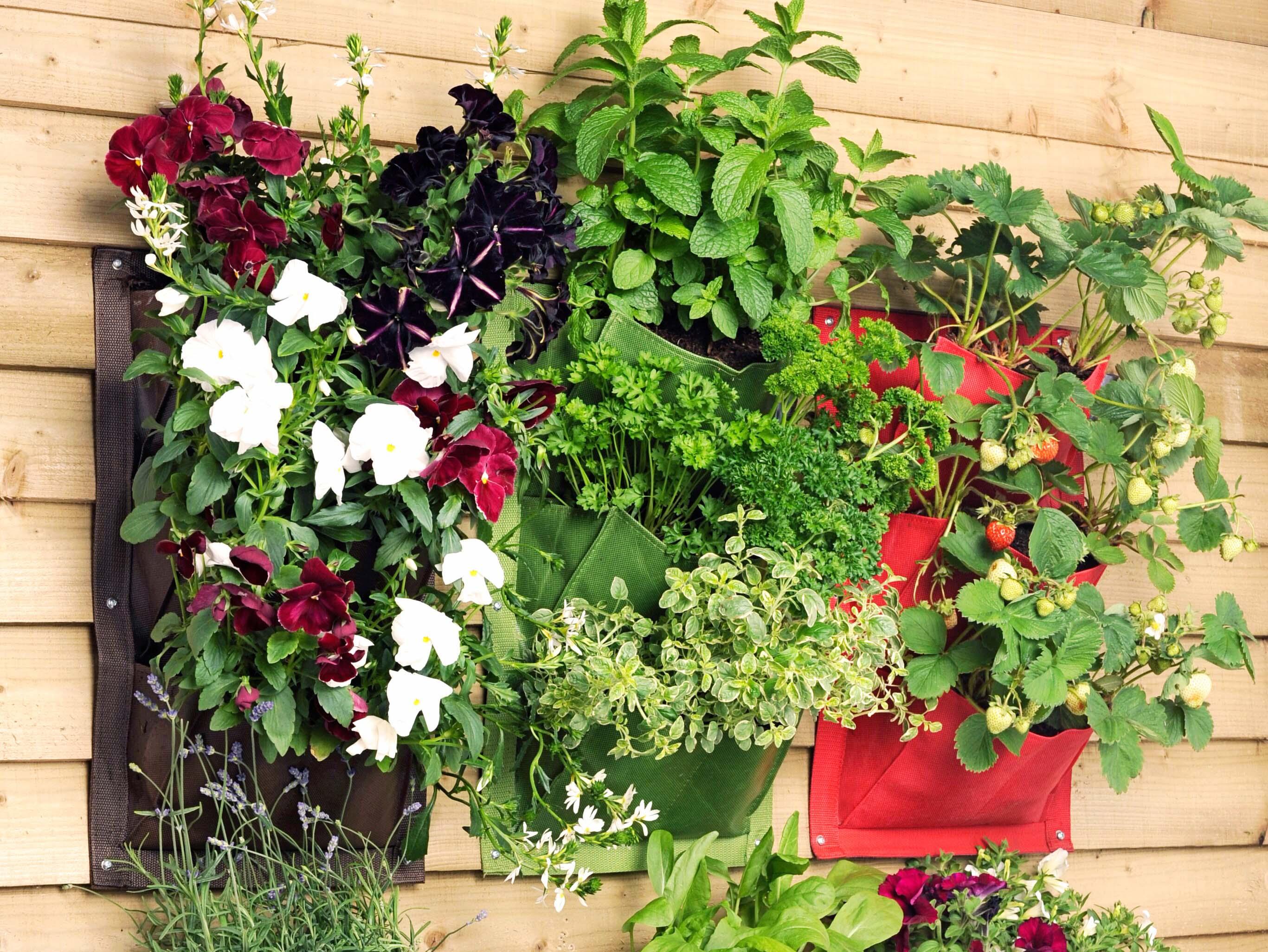 Planter på vegg ute