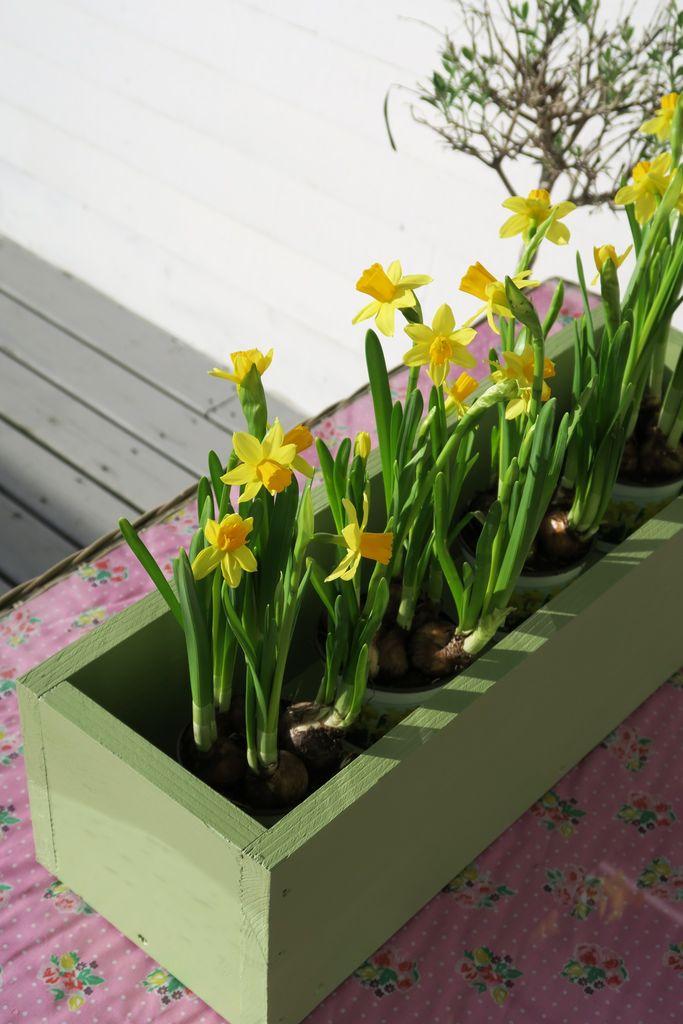 Skap påskestemning på terrassen eller uteplassen med helt enkle grep. En kasse med påskeliljer, en krans av bjørkegreiner, fargerik duk og puter gjør susen.