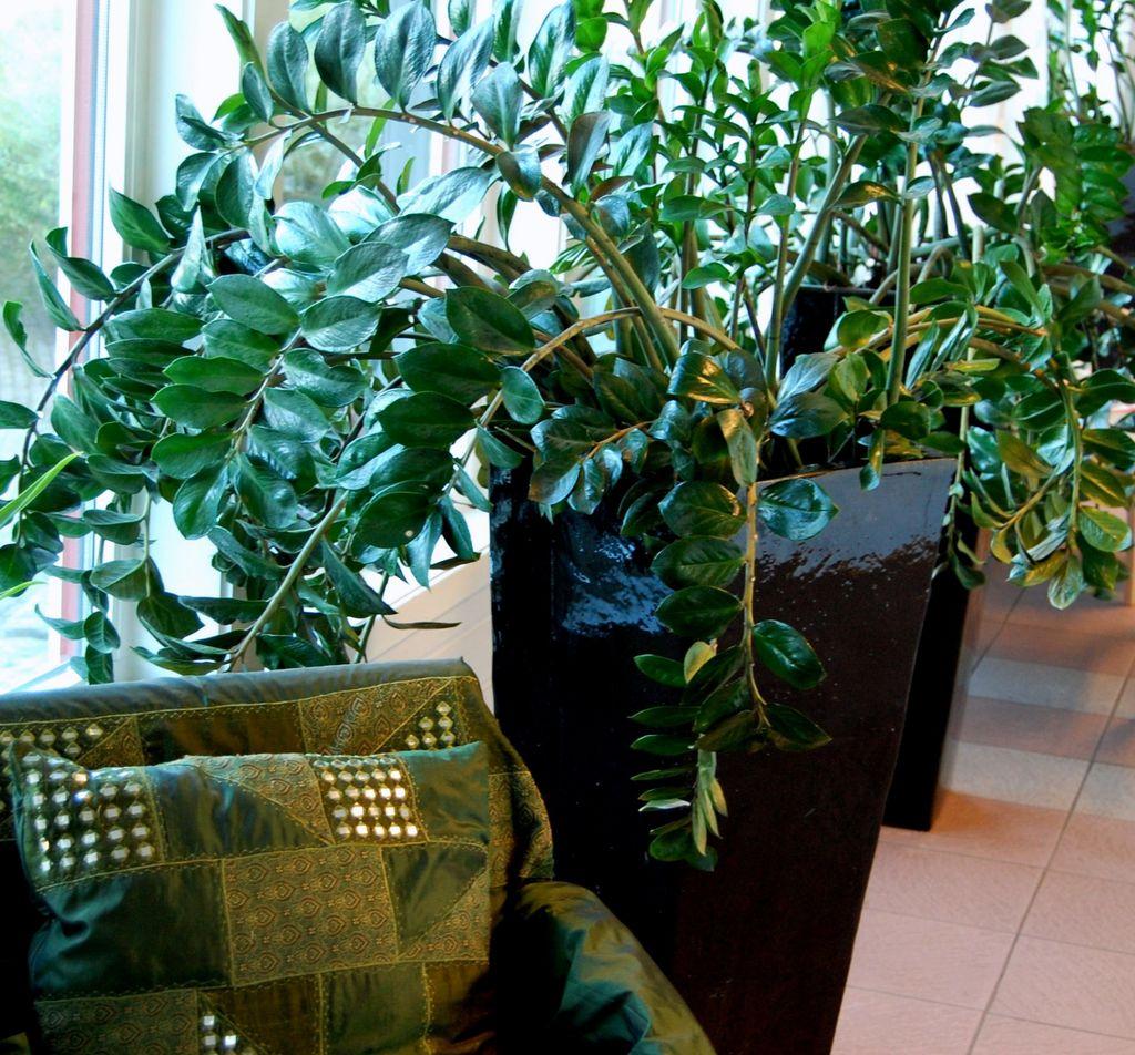 I vinduer som vender mot nord er lystilgangen begrenset. Her er planter som kan klare seg med lite sol, og likevel beholde et sunt og friskt utseende.