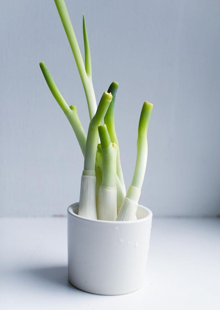 Disse grønnsakene kan du gro på nytt i vinduskarmen. Mange grønnsaker lar seg spise i reprise – helt gratis. Alt du trenger er litt tålmodighet.