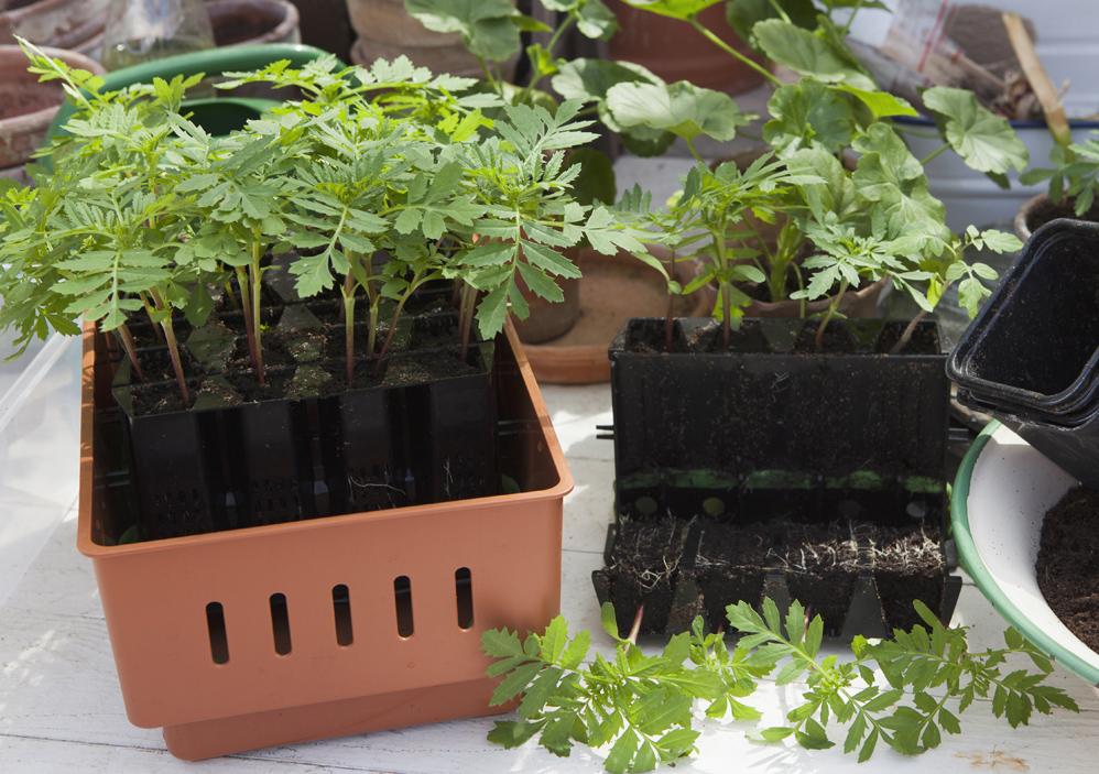 På tide å sette frø i jorda, men hva skal du så i? Mulighetene er mange, og prisene varierer. Her er tips om hvor du kan så frø og få dem til å spire.