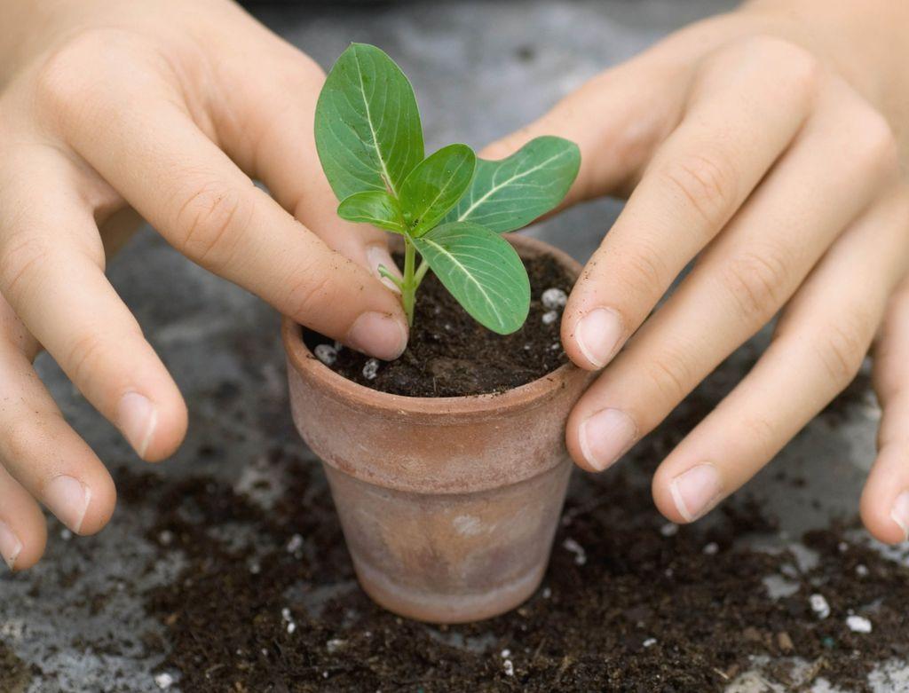 Er du en nybegynner i hagen? Unngå disse 7 nybegynnerfeilene, så er du langt på vei å lykkes i hagen.