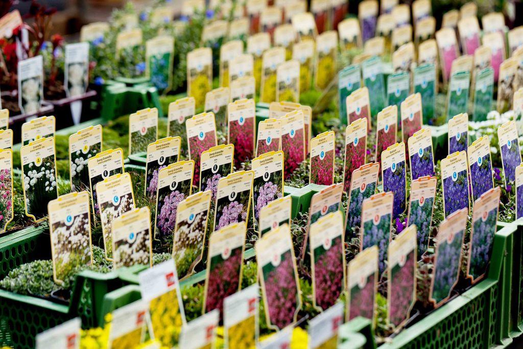 Er du en nybegynner i hagen? Her er 7 vanlige nybegynnerfeil det er greit å vite om på forhånd!