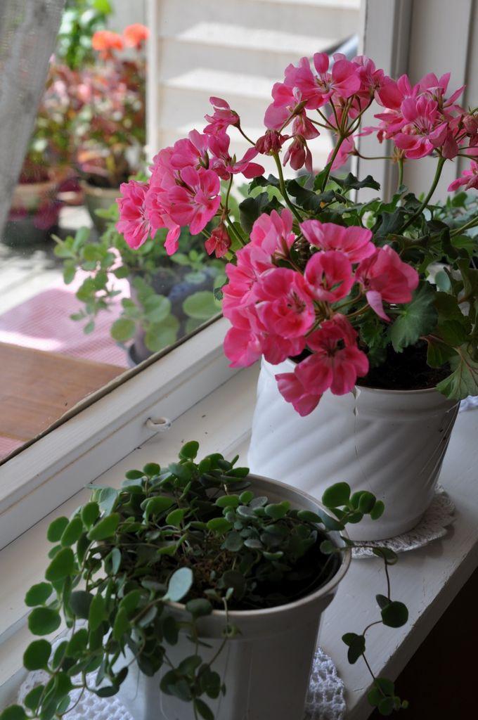 Hvilke blomster trives i hvilke vinduer? Når du innreder med blomster, bør du tenke på plasseringen av blomstene. Her er de som elsker og tåler mest sol.