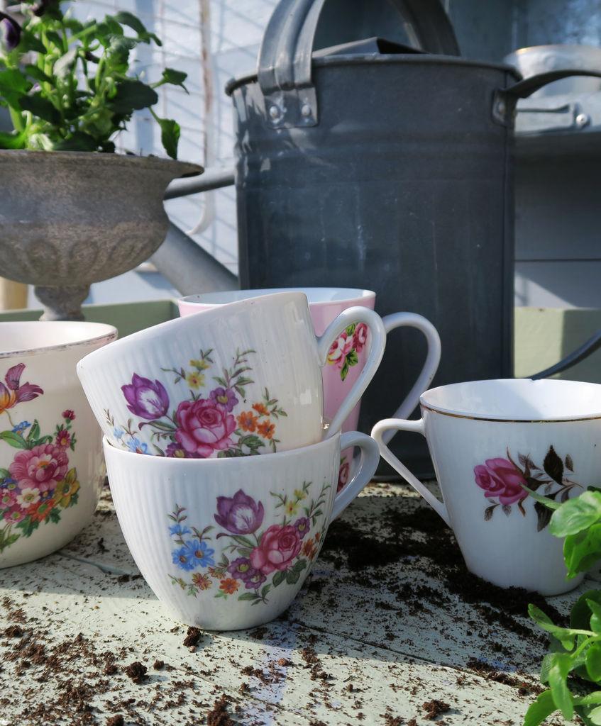 Her finner du tips til hva du kan plante stemorsblomster i, og hvordan du får dem til å blomstre gjennom sommeren. Prøv stemorsblomster i kaffekopper!