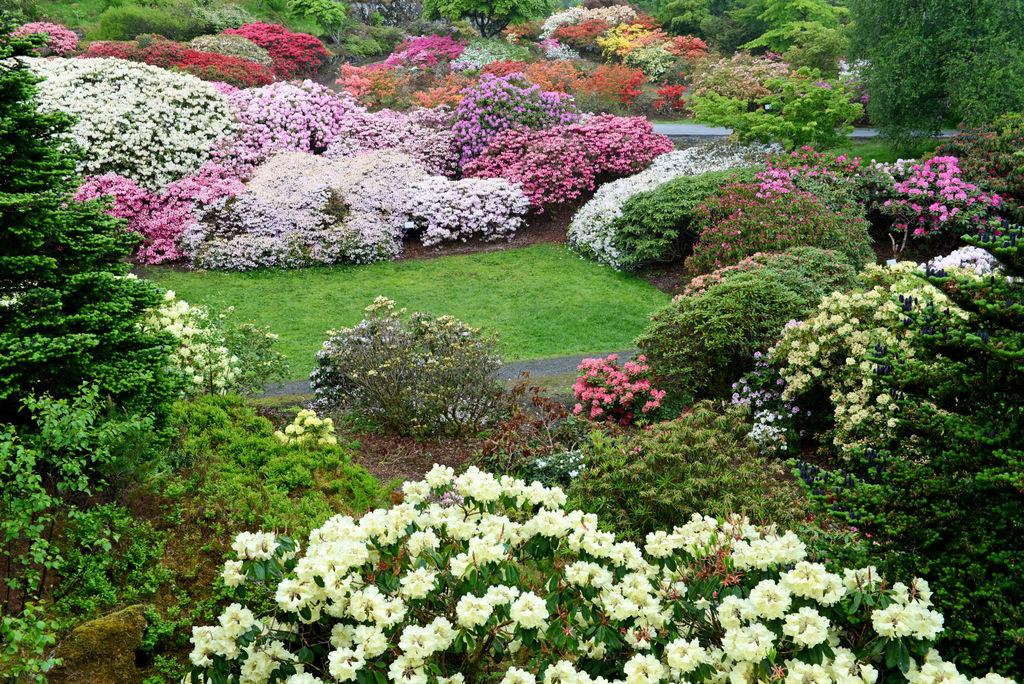 Arboretet i Bergen.