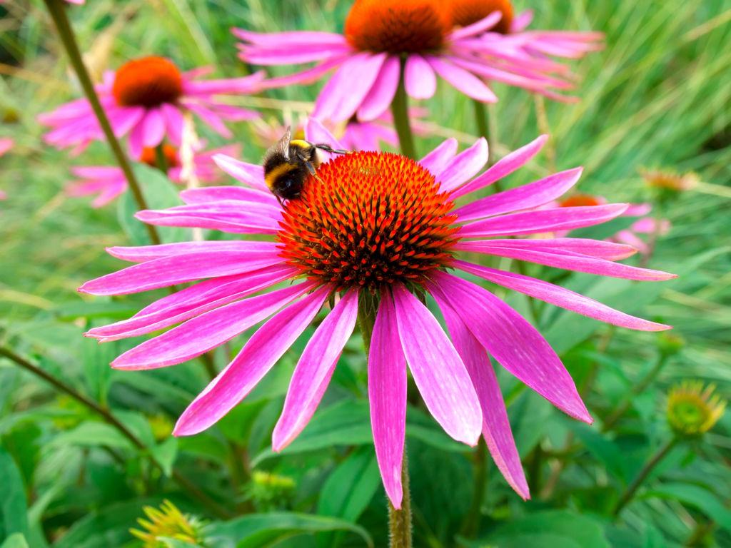 Skap din egen bie- og humlevennlige hage. Det er mye enklere enn du tror. Hageland vet hvordan, og har utarbeidet en egen Bie❤Blomst-kolleksjon