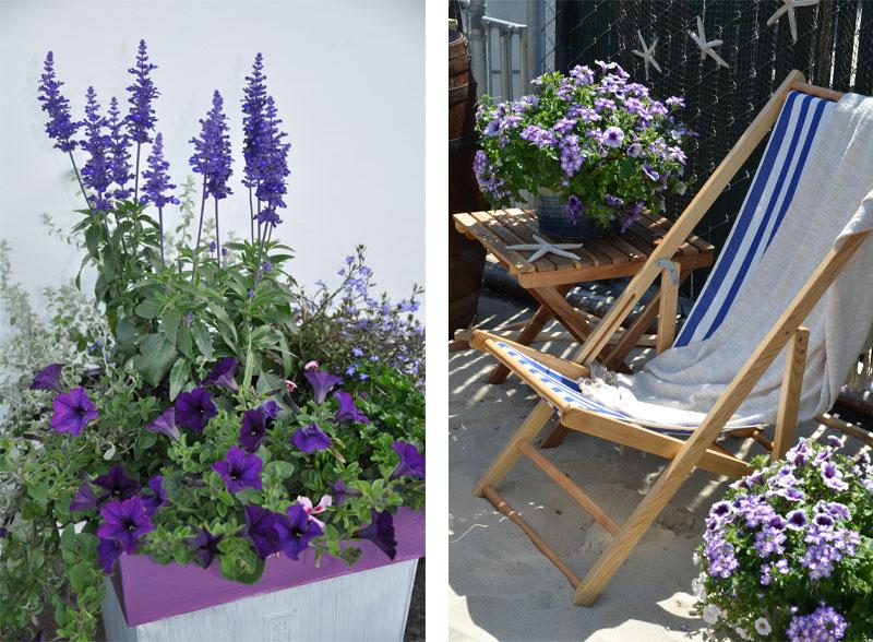 nydelig_terrasse_planter_blå
