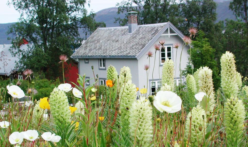 Tromsø arktisk-alpine botaniske hage.
