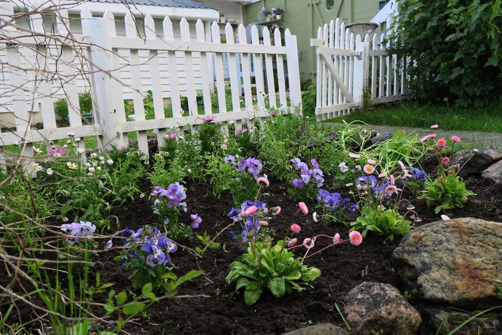 Tips og ideer til hvordan det kan plantes i et blomsterbed.