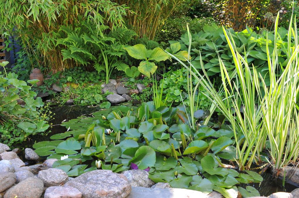 Stein er vakkert. Og har den lure fordelen at de dekker bar jord. Her er stein brukt i forbindelse med en dam.