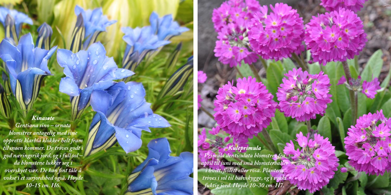 Blomster11