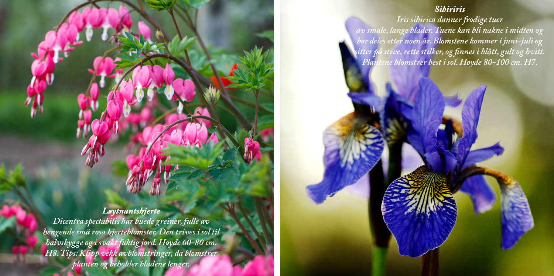Blomster8