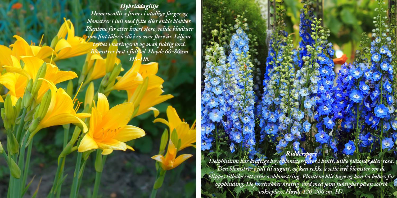 Blomster9