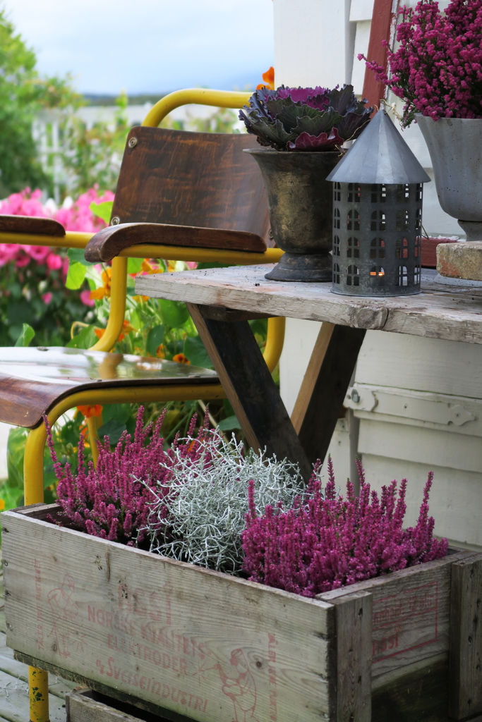 Tips til valg av høstplanter og planting. Jeg skriver også om hvordan du kan lage et vakkert stilleben.
