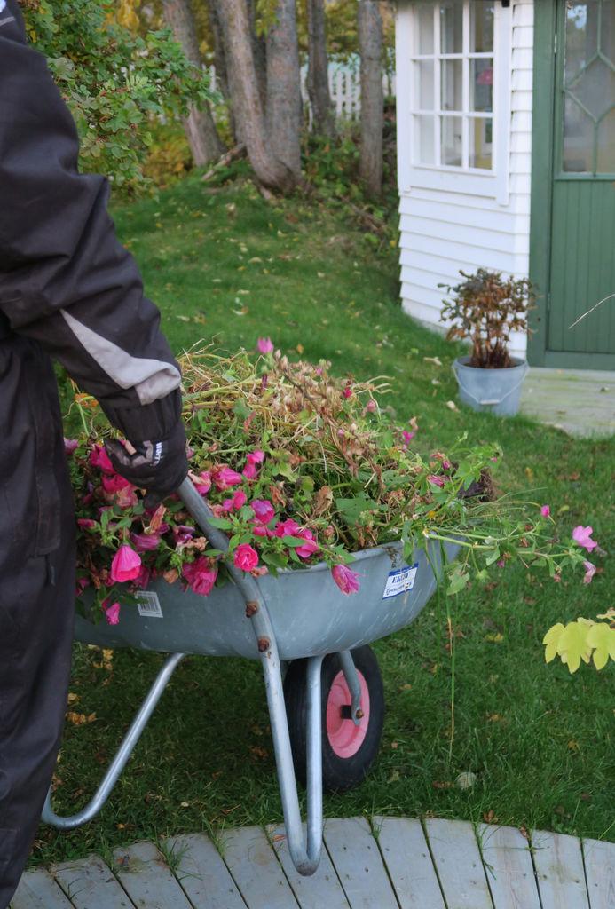 Tips til stell av bed med sommerplanter før vinteren kommer.