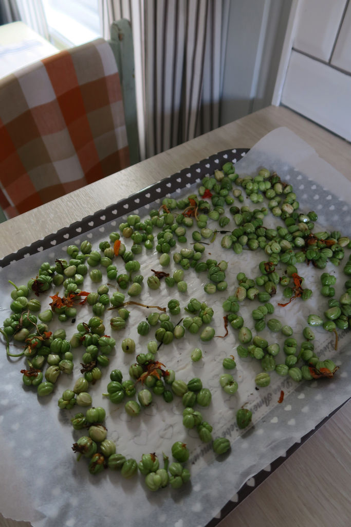Tips om innsamling av blomkarsefrø, og hvordan de kan tas vare på, og oppbevares gjennom vinteren.