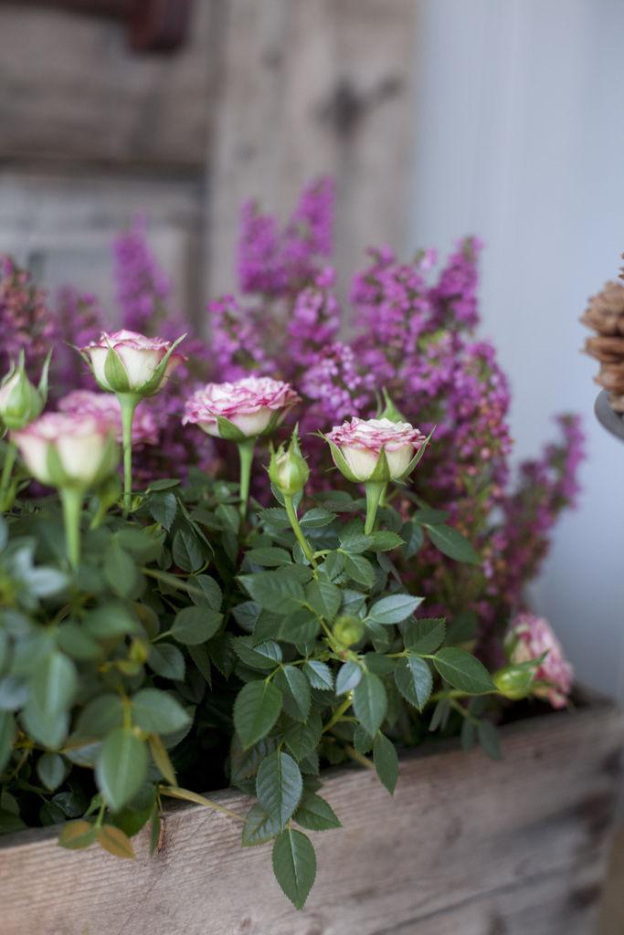 roser i kasse - Trude Lindland