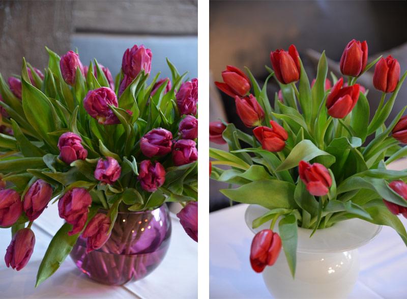 lilla-og-røde-tulipaner