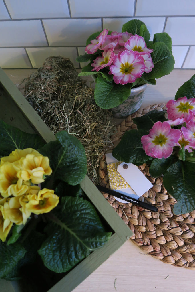 Tips til hvordan man kan dekorere med primula.