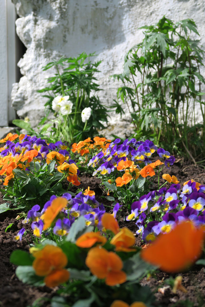 Tips om planting, beskrivelse av noen stauder, samt ideer til dekor i et steinbed.
