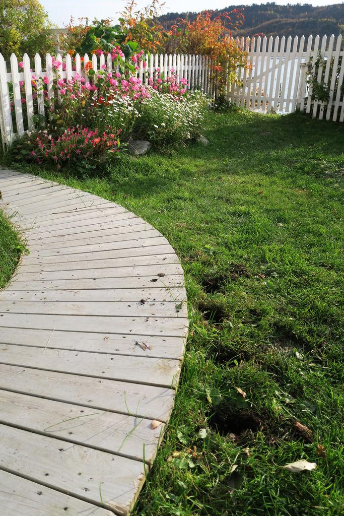 I denne saken finner du tips til hvordan du kan plante løk og oppbevare dem fram til våren, og til jul.